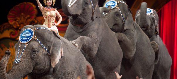 ringling-circus-elephants