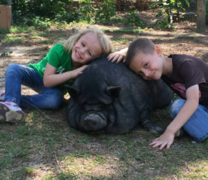 The Big Myth: Why So Many Potbelly Pigs are Abandoned