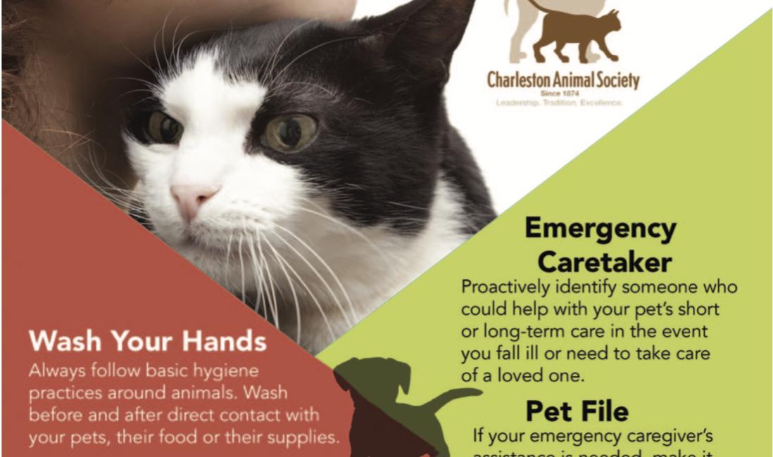 Covid19 Pet tips
